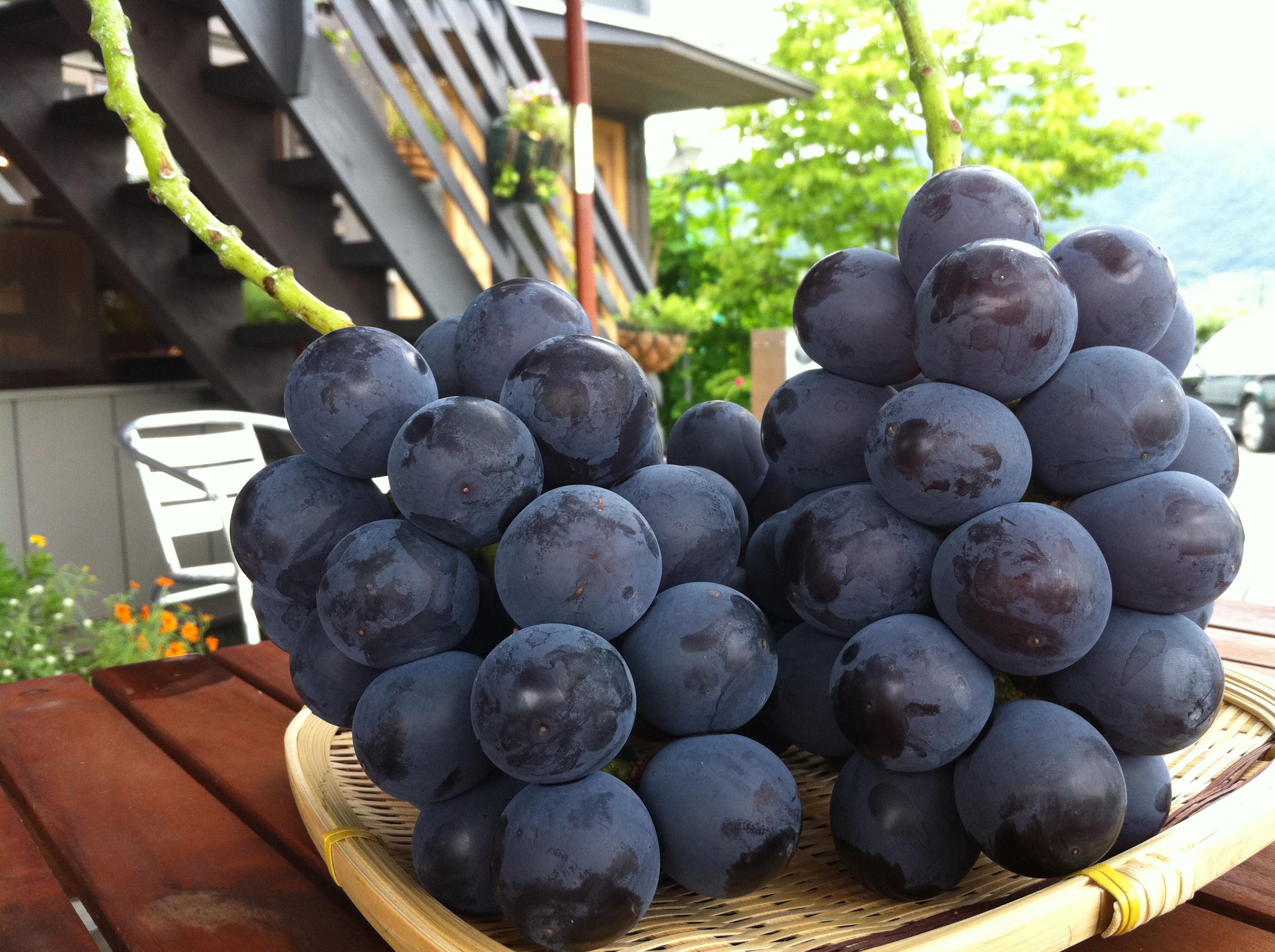 http://www.momo-net.co.jp/peach_blog/20110821%20041.jpg