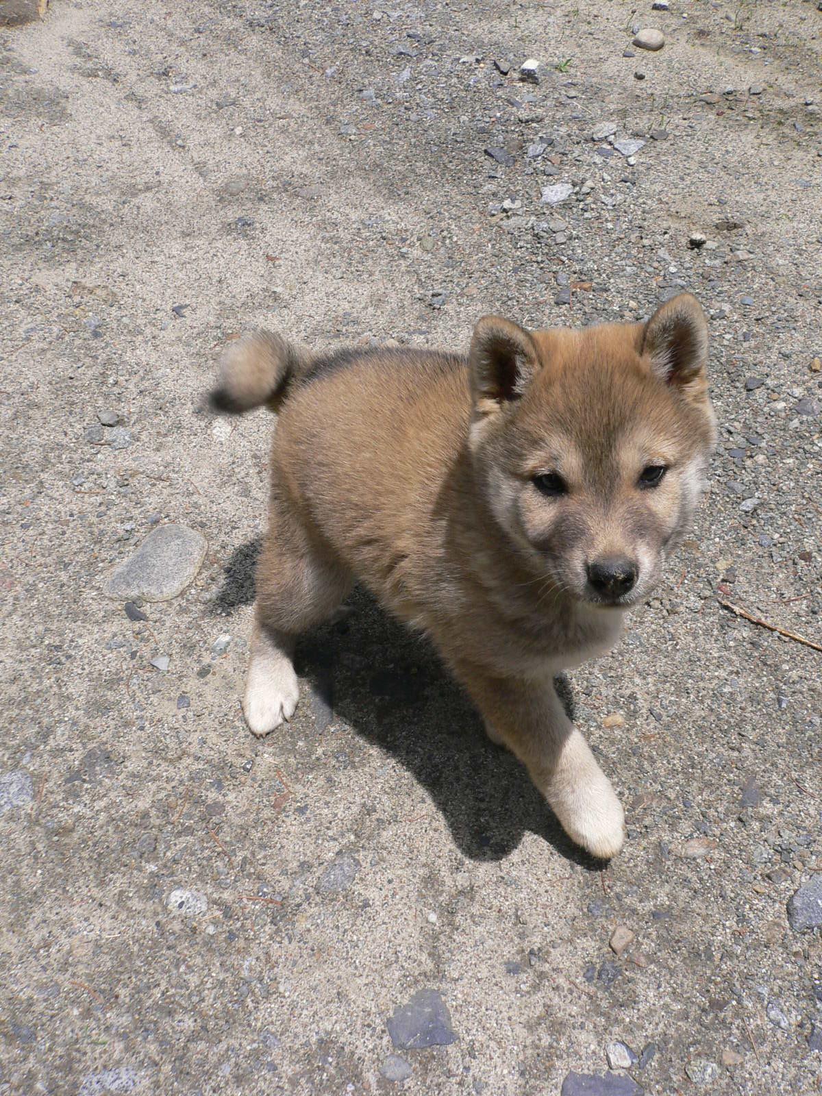http://www.momo-net.co.jp/peach_blog/P1030549.JPG
