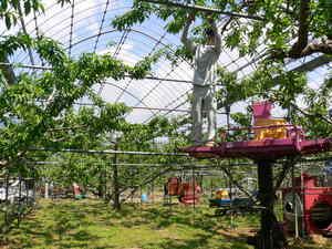 http://www.momo-net.co.jp/peach_blog/assets_c/2011/05/P1030398-thumb-300x225-760.jpg
