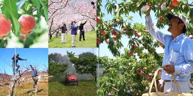 桃・ブドウの生産